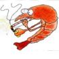 St0nedshrimp