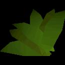 Ranarra